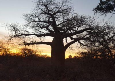 Jack Klaff Baobab